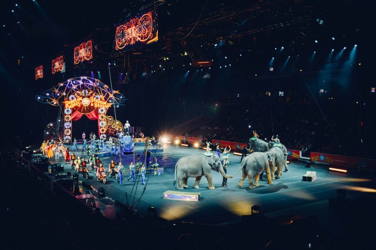 Światowy dzień cyrku